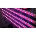 Фитолампа светодиодная тепличная Т8 600мм G13 12Вт